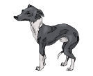 Dog Ibizan Hound Animal Vector Clipart