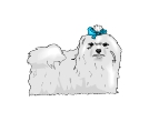 Dog Pomeranian White Animal Vector Clipart