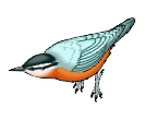 Birds Nuthatch Free Clipart