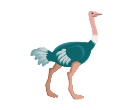 Birds Ostrich Vector Free Clipart