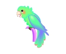 Parrot Colour Birds Vector Clipart