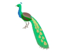 Peacock 3d Birds Vector Clipart