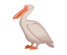 Pelican 3d Birds Vector Cliparts
