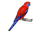 Rosella Birds Drawing Vector Cliparts