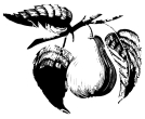 Pear Tree Drawing Vector Cliparts