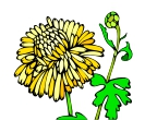 Flower Chrysanthemum Vector Free Clipart