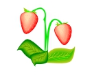 Strawberrys Leaf Vector Cliparts